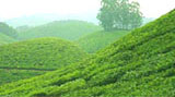 Hill Station in Tamilnadu